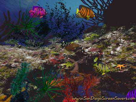 3D Angel Fish