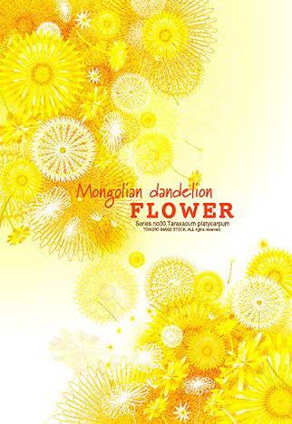 矢量花卉花纹素材