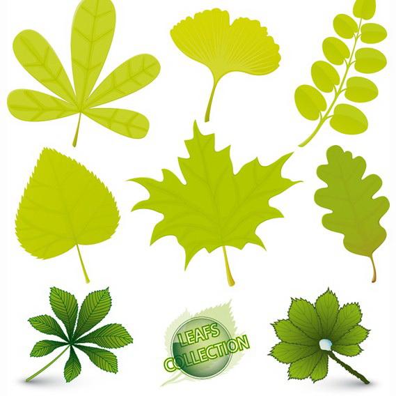 矢量不同植物叶子图_矢量不同植物叶子图模板