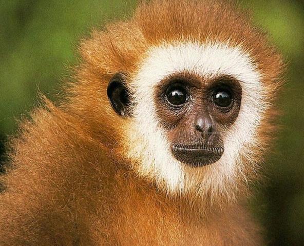 Monkeys Free Screensaver
