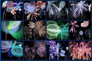 MBSS Fireworks