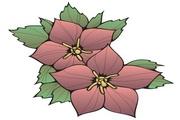 矢量花朵素材91