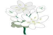 矢量花朵素材132