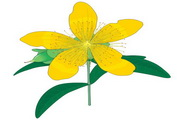 矢量花朵素材130