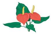 矢量花朵素材134