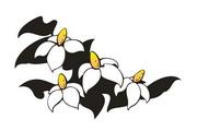 矢量花朵素材111