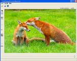 改变图片透明度工具专业版 1.3