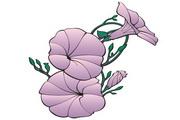 矢量花朵素材90