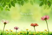 春天花卉背景源文件