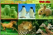 可爱动物图片拼...