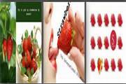 草莓水果营销PPT模板