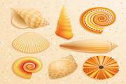 沙滩贝壳矢量素材