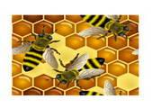 矢量蜜蜂素材