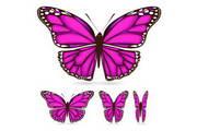 矢量蝴蝶素材5
