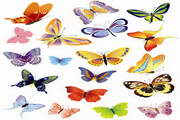 矢量蝴蝶素材12
