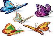 矢量蝴蝶素材15