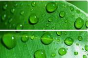 绿叶水滴ppt模板