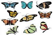 矢量蝴蝶23