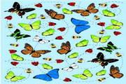 矢量蝴蝶25