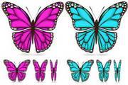 矢量蝴蝶26