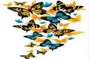 矢量蝴蝶27