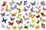 矢量蝴蝶33