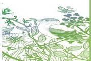 自然动植物背景矢量素材
