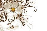 野菊花和时尚花纹矢量图