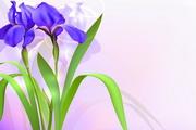 紫色花卉横幅模板矢量素材