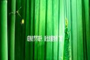 竹林绿笋PPT模板