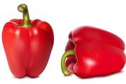 西红柿蔬菜矢量图