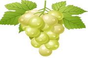 新鲜葡萄矢量素材图