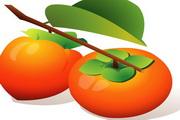 柿子柠檬水果矢量图