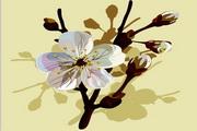 矢量樱桃树枝花卉