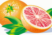 西柚水果矢量...