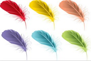 矢量多彩羽毛