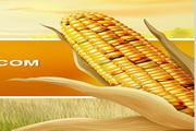 农田玉米PPT模板