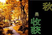 夏与秋ppt模板