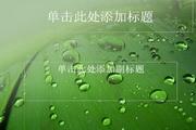 绿叶水珠ppt模板