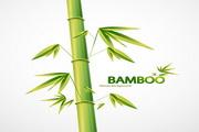 绿竹主题矢量背景图模板