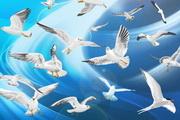 光晕下飞翔的鸟矢量素材