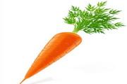 矢量新鲜蔬菜03