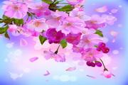 春季粉色花卉矢量素材