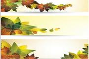 矢量秋季树叶设计