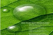 矢量绿色植物设计