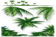 椰子树矢量图