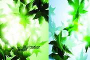 绿色枫叶背景矢量图素材