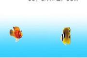 漂亮的热带鱼PPT模板