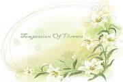 植物装饰边框素材18