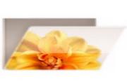 花朵文件夹图标下载